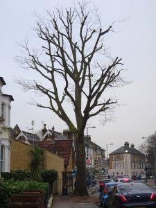 160119 Patternity branches tree in St Mags full pic for web