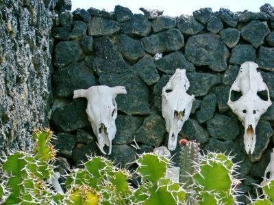 1004 Fundacion Cesar Manrique 09 cactus & skulls for web